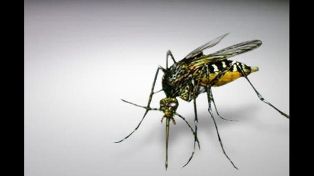 City of Canyon Has Mosquito Outbreak