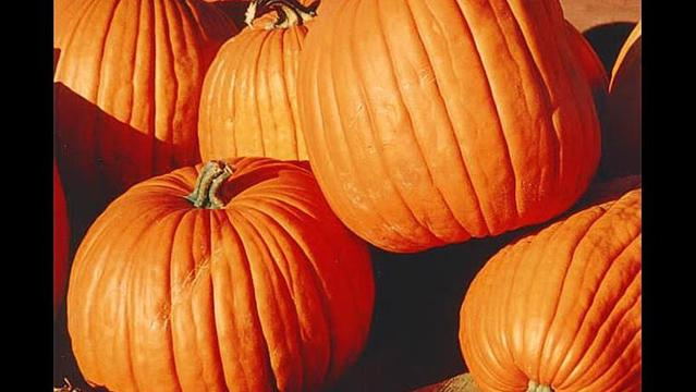Pumpkins Benefit Eastern New Mexico Food Bank