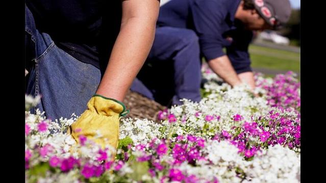 Volunteers Needed for the Amarillo Botanical Gardens