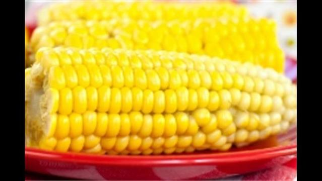 The secret life of GM sweet corn