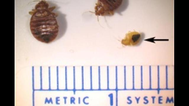 Survey says scientists see bed bugs as real issue