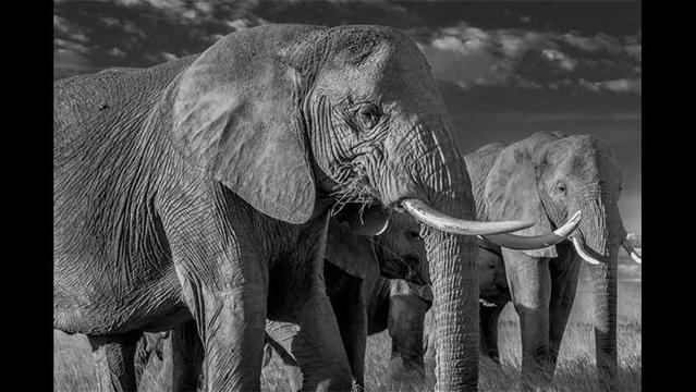 Goodall, DiCaprio urge full ivory ban