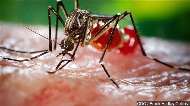 Las Vegas mosquitoes testing positive for West Nile virus