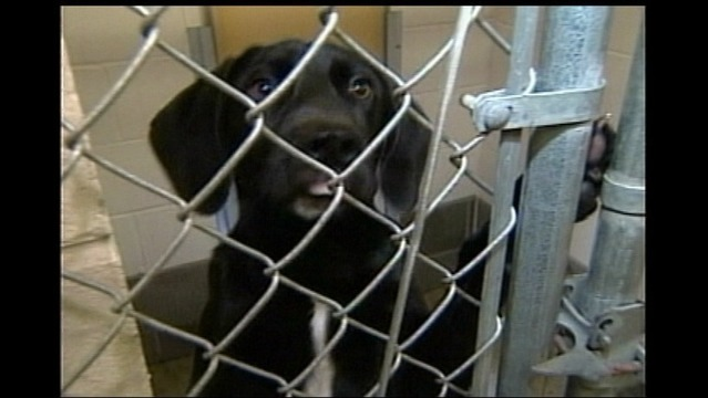 Amarillo Panhandle Humane Society Clearing the Shelters for New Year's