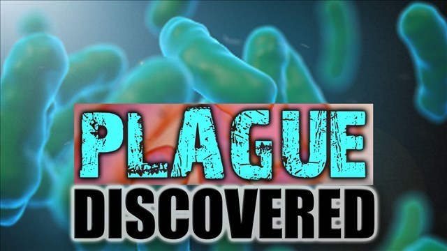 Additional Cases of Human Plague Reported in New Mexico