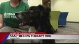 Therapy dog now working to help local cancer survivors